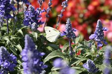 Free Butterfly On Summer Lawn Stock Photography - 2651002