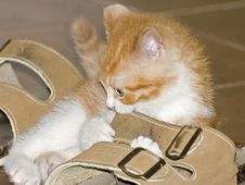 Free Kitten In Boot Royalty Free Stock Images - 2651509