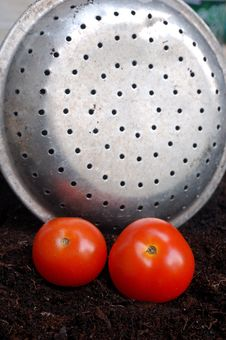 Free Home Grown Tomatoes Royalty Free Stock Photos - 2653048