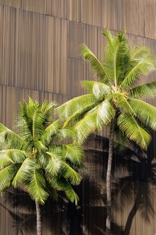 Free Palm Trees Royalty Free Stock Photo - 2653385