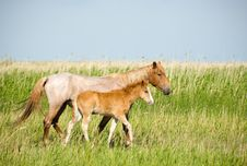 Free Horses Family. Stock Photography - 2654652