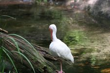 Free Resting White Bird Royalty Free Stock Images - 2655889