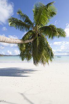 Free Palm Tree Royalty Free Stock Photography - 2657267