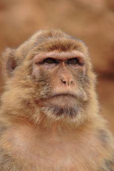 Free Monkey Expression Stock Photos - 2658303