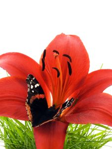 Free Butterfly On Lily Stock Photo - 2659140