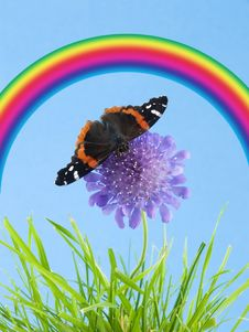 Free Butterfly On Flower Royalty Free Stock Photos - 2659218