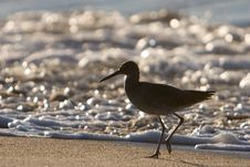 Free Bird On Beach Royalty Free Stock Photos - 2659298