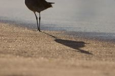 Free Bird S Shadow Stock Photography - 2659302