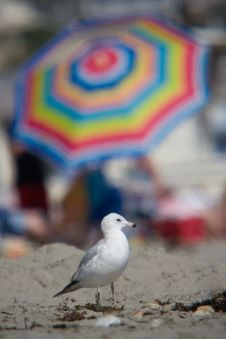 Free Seagull And Umbrella Royalty Free Stock Images - 2659429
