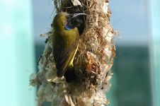 Free Birds And Bird Nests Royalty Free Stock Photo - 2659695