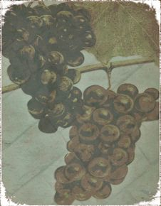 Free Abstract Grunge Hanging Bunches Of Grapes Stock Photography - 26500222