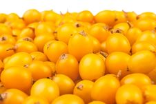 Free Buckthorn Berries Royalty Free Stock Photo - 26502045