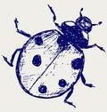 Free Ladybug Sketch Stock Image - 26513761