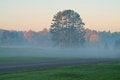 Free Morning Foggy Landscape Royalty Free Stock Images - 26517819