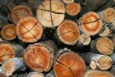 Free Eucalyptus Logs Stock Images - 26511104