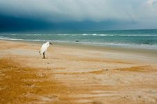 Free Egret On A Beach Stock Images - 26512934