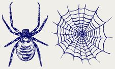 Spider And Cobweb Stock Image