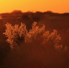 Free Golden Bush - Sunset, Africa !!! Royalty Free Stock Photo - 26517295