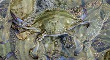 Free Crab Royalty Free Stock Image - 26518276