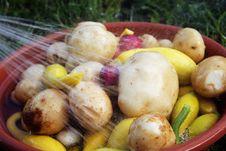 Free Garden Fresh Royalty Free Stock Image - 26519166