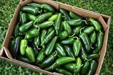 Free Mountain Fresh Jalapeno Peppers Royalty Free Stock Photography - 26519167