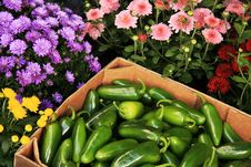Free Jalapeno Peppers And Flowers Royalty Free Stock Images - 26519169