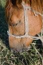 Free Horse Grazing Stock Photos - 26521253