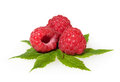 Free Raspberries Isolated On White Royalty Free Stock Photo - 26522455