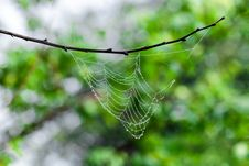 Free Water Drops On Cobweb Royalty Free Stock Image - 26521776