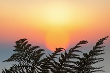 Free Fern Leaf In Front Of The Sunrise Royalty Free Stock Images - 26523419
