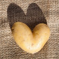 Free Love Potatoes Royalty Free Stock Images - 26531479