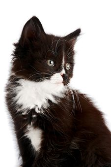 Free Portrait Of A Black-and-white Kitten Royalty Free Stock Images - 26532379