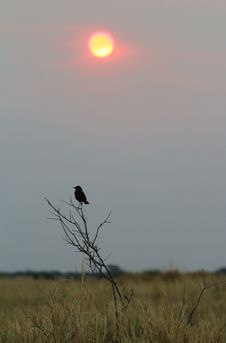 Sunset Over Anteating Chat - Africa Stock Photography