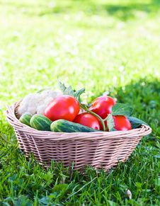 Free Vegetables In Basket Royalty Free Stock Photography - 26539387