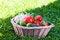 Free Vegetables In Basket Stock Image - 26539391