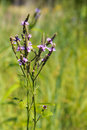 Free Wild Flowers Stock Image - 26546201