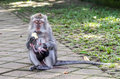 Free Mother And Baby Monkey Eating Royalty Free Stock Photography - 26548007