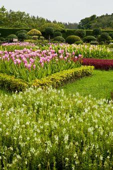 Free Flower Garden Stock Image - 26545461
