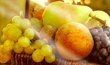 Organic Fruits - Autumn Fruits Royalty Free Stock Photography