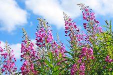 Beautiful Wildflowers Meadow Stock Photo
