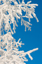 Free Tree In Frost Stock Photos - 26550843