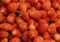 Free Juicy Strawberries Royalty Free Stock Photos - 26554598