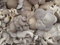 Free Organic Mushrooms Stock Photography - 26565532