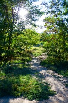 Pathway In The Forest Stock Photography
