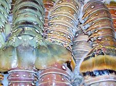 Lobster Tails Stock Image