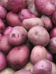 Free Organic Red Potatoes Stock Photos - 26565533