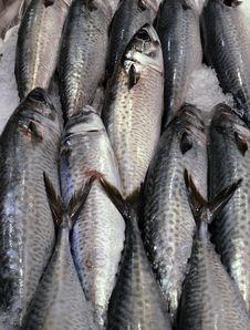 Free Fish Stock Image - 26566011