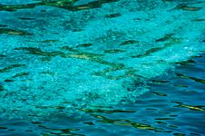 Free Jellyfish Background Stock Image - 26569951