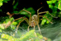 Free House Spider Stock Images - 26572204