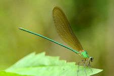 Free Dragonfly. Stock Photography - 26570952